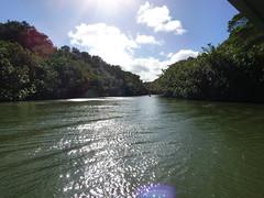 Wailua River State Park - Fern Grotto (93) (pensivelaw1) Tags: hawaii kauai wailuariverstatepark ferngrotto