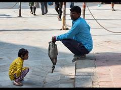 Staring at a duck, Durbar Square, Kathmandu, Nepal (jitenshaman) Tags: travel destinations worldlocations asia asian nepal nepali kathmandu duck fowl bird vendor seller girl funny comical stare staring child curious curiosity market birds ducks