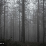 The lonely woods… thumbnail