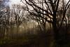 Misty Trees (steveh011) Tags: canon morning sunshine haze misty scene reserve nature landscape light woods trees explored explore swanwick lakes sun cold