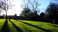 low sun and long shadows in the old boneyard (byronv2) Tags: edinburgh edimbourg scotland oldtown shadows cemetery graveyard winter greyfriars greyfriarskirkyard kirkyard boneyard history green headstone tombstone trees