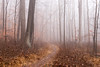 20171223 (Homemade) Tags: woods forest trees fog nikon2470mmf28 nikkor2470mmf28 westchestercounty leonlevypreserve westchesterlandtrust path hike trail lewisboro southsalem newyork ny