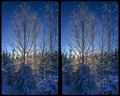 Winter near Beerheide 3-D / CrossView / Stereoscopy / HDR / Raw (Stereotron) Tags: saxony sachsen vogtland winter snow cold ice frozen outdoor outside nature forest woods outback backcountry wilderness europe germany crosseye crosseyed crossview xview cross eye pair freeview sidebyside sbs kreuzblick 3d 3dphoto 3dstereo 3rddimension spatial stereo stereo3d stereophoto stereophotography stereoscopic stereoscopy stereotron threedimensional stereoview stereophotomaker stereophotograph 3dpicture 3dglasses 3dimage twin canon eos 550d yongnuo radio transmitter remote control synchron kitlens 1855mm tonemapping hdr hdri raw