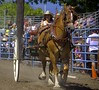 Rodeo Event (Scott 97006) Tags: horse buggy rider woman crowd grandstand competition