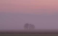 Fenland Isolation (Julian Barker) Tags: donington lincolnshire east midlands england uk fenland fens flat land arable agriculture trees isolation alone sunset dusk canon dslr 600 julian barker