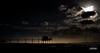 un quinté de carrelets... quel est votre ordre d arrivée ? 5/5 (peu présente...ailleurs !) Tags: carrelet océan yves ciel intempérie yavaitduvent ilfaisaitfroid