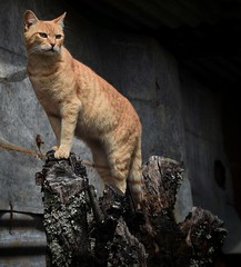 The only limits you have are the limits you believe. (abhishekskumar) Tags: nature naturelovers natureza coolshots love cat catphotography domestic alien kitten explore candid concept wildlife tree trunk lovelyshooftheday planetearth motherearth mothernature pose cute cuteness