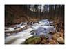 Der Ilsenbach (PhotoChampions) Tags: water wasser bach creek ilsenburg ilsenbach winter felsen rocks trees bäume longtime
