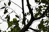 20171225-0I7A5052 (siddharthx) Tags: singapore sg redearedslider sungeibulohwetlandreserve canon7dmkii ef100400mmf4556lisiiusm nature wildlife migratorybirds whitebreastedwaterhen milkystork whimbrel commongreenshank commonredshank lessersandplover curlewsandpiper chineseegret greatercrestedtern orientalpiedhornbill collaredkingfisher orientaldollarbird greyheron vulnerable mangroves wetlands marsh nparksbuzz tree water mangrove bird landscape paintedstork purpleheron sky animal greategret snowyegret habitat nightheron forest wood monitor watermonitor lizard saltwatercrocodile grass malayanwatermonitor asianwatermonitor commonwatermonitor twobandedmonitor ricelizard ringlizard plainlizard nomarklizard periophthalmusargentilineatus rock river foliage gerridae waterstrider pondskaters waterskippers jesusbugs birdsinflight birdsinthewild wetland egret crab purplesunbird sunbird spiderhunters nectariniidae
