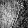Homotopic Bark (Will Vale) Tags: zealandia karorisanctuary p9 wellington leica huawei karori p9plus