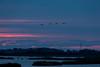 Delta del Po (iLaura_) Tags: fenicotteri alba pianura delta deltadelpo nuvole cielo sky sunrise landscape panorama