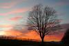Hasta la vista 2017! (G. Lang) Tags: badenwürttemberg sunset wolken auggen allemagne clouds nuages vignobles vosges baum vineyards deutschland weinreben vogesen sonnenuntergang tree weinberg coucherdusoleil germany markgräflerland arbre