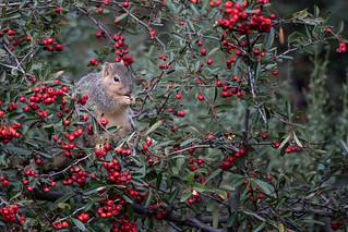 Ensconced in Berries