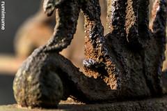 A Closer Look (rumimume) Tags: potd rumimume 2017 niagara ontario canada photo canon 80d sigma fall autumn stmarks church graveyard sun november outdoors history uppercanada age notl