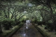 (misunderstories) Tags: nhàvườnanhiên anhiengardenhouse huế vietnam asia monsoon green