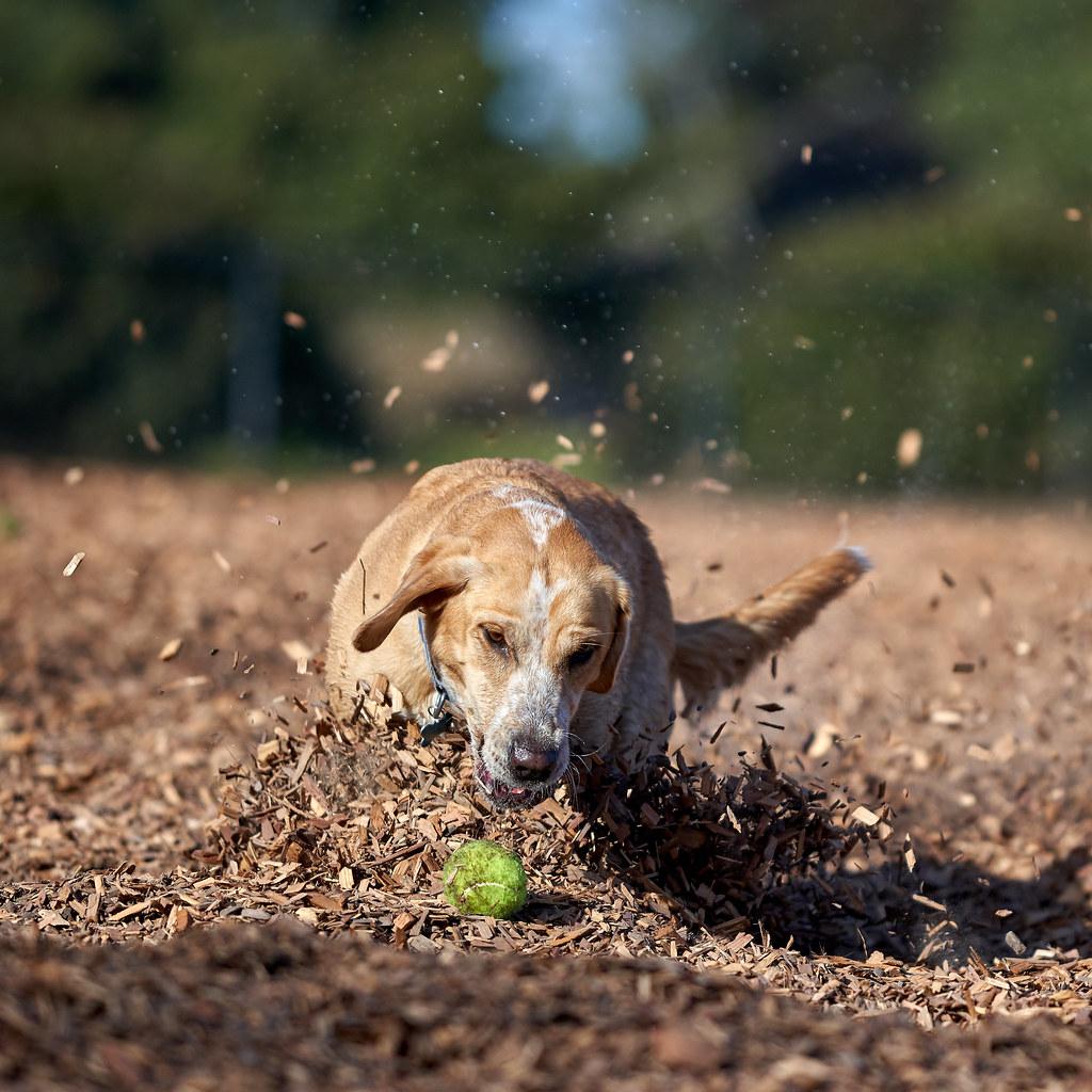 Sebastopol Dog Park