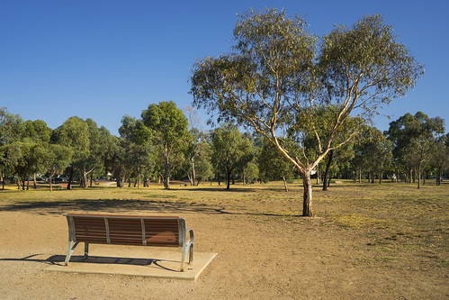 Park bench before gum tree