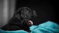 DOG DAYS 画像