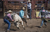 Walking Away (allentimothy1947) Tags: 2017 calfiornia duncanmills bulls horses riders rodeo cowboy clown protect distract walk danger photography timothysallen hat jeans shirt arena dirt horns gore sonomacounty russian river