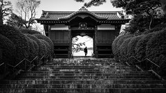 Blessed - Tokyo, Japan - Black and white street photography (Giuseppe Milo (www.pixael.com)) Tags: photo street city light contrast man urban blackandwhite candid walking streetphotography photography tokyo bw japan black temple white bunkyōku tōkyōto jp onsale faceless