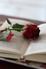 A rose (kattheraccoon) Tags: art photography canon canoneos1300d eos 1300d camera book romance romantic rose red reading relaxing winter flower