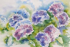 573 Hortensien (Wuwus Bilder) Tags: hortensien aquarell watercolour ownpainting