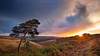 The Bowing Pine (Explore) (Twogiantscoops) Tags: merge shutterrelease canon filters landscape clouds sky photomerge tree pano oil southwest effects autumnal light westcountry valley rain creative chrismarshallsimages crop dancingtrees sunkissed country west countryfile treescape 5dmk2 photoshop mirrorlock dawn painterly secret sunrise creativity devon cpfilter manfrotto textural 1635 tripod photography art golden rainfall levels perspective nature starburst wild windy scoopsimages glory panorama seasons colours lee countryside britishheartfoundation outback neutraldensity wet areyouanorgandonor dartmoor pinetree ndgrads lonetree