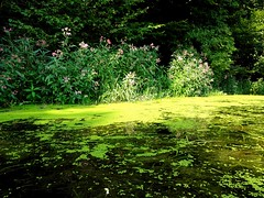 Ilz Seegras (cesp-one) Tags: ilz seegras grüne grün