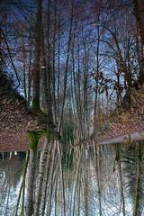 le monde à l'envers (rondoudou87) Tags: pentax k1 nature natur sauvage reynou parc park parcdureynou zoo reflection reflexion water eau tree arbre envers
