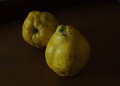Membrillos - (valorphoto.1) Tags: selecciónvp membrillos luz interior fondooscuro natural naturalezasmuertas stilllife frutas photodgv