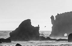 El Matador 3 (Robert Borden) Tags: birds elmatadorbeach malibu la losangeles cali socal california usa monochrome blackandwhite bw canon canonrebel canonphotography canonusa cormorants