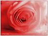 Monochrome Rose (magritknapp) Tags: hmm rose naturfarbezartesgelb konvertiertinsw eingefärbtinrottöne glitzergummi tenderyellownaturalcolor convertedtobw coloredinredtones glitterrubber tendrecouleurnaturellejaunetendre convertiennoiretblanc coloréentonsrouges caoutchoucscintillant amareloamarelodecornatural convertidoembw coloridoemvermelhos coloramarillonaturaltierno convertidoablancoynegro colorentonosrojos cauchobrillante colorenaturalegiallotenero convertitoinbn coloratointonirossi gommalucida gekleurdegeelnatuurlijkekleur convertorteerdnaarbw gekleurdeinrodetinten naturfärgtendergul konverteradtillbw färgadiröda glittergummi naturfarvetgul omdannettilbw farvetirødt delikatnykolorżółtynaturalny przeliczonynabarwęczarnobiałą barwionywodcieniachczerwonych kauczukbłyszczący monochrome