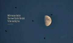 Daily Haiku: Dusk (James Milstid) Tags: dailyhaiku haiku haiga poetry jemhaiku dusk crow corvid moon luna crows