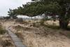 log paved path - Bohlenweg (meine.augenblicke) Tags: hohesvenn trees 2017 nordrheinwestfalen wallonie urlaub wege logpavedpathes kameranikond750 belgien bäume ways bohlenweg moorlandschaft