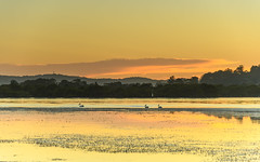 Dawn Waterscape with Pelicans (Merrillie) Tags: daybreak woywoy landscape nature australia foreshore newsouthwales earlymorning nsw brisbanewater morning dawn coastal water sky waterscape sunrise centralcoast bay outdoors