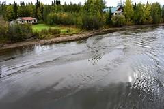 Chena River (thomasgorman1) Tags: river chena ak alaska tour houses shore riverbank reflection current riverboat forest trees nikon