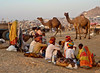 Rajasthan - La fore aux chameaux de Pushkar. (Gilles Daligand) Tags: foireauxchameaux rajasthan pushkar camels fair panasonic tz7
