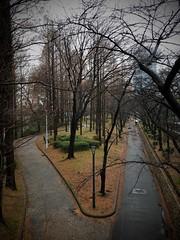 Sakuranomiya. (Leodileo) Tags: trees osaka japan winter sakuranomiya iphone8