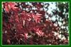 Herbst und Bokeh (günter mengedoth) Tags: herbst laub blatt bokeh herbstfaerbung historisch festbrennweite autumn autumncolors bubblesbokeh carl zeiss jena biometar 80 mm f28 carlzeissjenabiometar80mmf28
