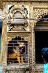 Locked winged lion, Old Town, Varanasi (Sekitar) Tags: uttar uttarpradesh india inde varanasi benares ganga ganges river riverside lion old town sculpture oil lamp locked winged