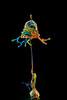 AAA_4019 (Angelo M51 (Angelo Metauri)) Tags: fluid fluids splash angelom51 drops abstract collisiondrops colors acqua water waterdrops watersculpture liquid liquidart macro mcroliquid gocce speedphotography stilllife angelometauri artliquid