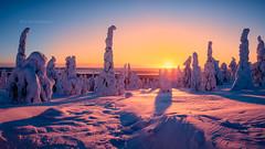 Sunset Sentinels (M.T.L Photography) Tags: sunsetsentinels riisitunturi nationalpark lapland mtlphotography mikkoleinonencom winter snow sky sunset sun heavysnow tykky tykkypuut winterwonderland posio suomi kitkajärvi