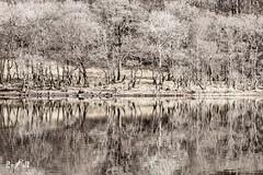 Trees (near Glencoe, Scotland) (Renate van den Boom) Tags: 02febuari 2018 boom europa glencoe grootbrittannië jaar landschap maand meer monotoon natuur renatevandenboom schotland seizoenen stijltechniek winter