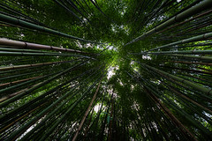 Buscando a Rá (noldor12) Tags: bambú canoneos6d canonef1635f4lisusm barriodelpobaal muskiz ríobarbadún bizkaia paisvasco spain