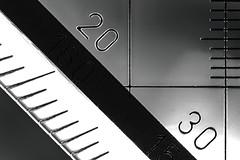 "Macro Mondays: ""Less Than An Inch"" (TeeB83) Tags: canonef50mmf25compactmacro ef50mmf25compactmacro 50mm macro makro bw blackandwhite schwarzweis lessthananinch canoneos80d eos80d macromondays"