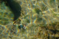 Tiny Zebra fish (zassle) Tags: beach coastal fauna fish landscape rockpools scenery wildlife camera:make=fujifilm geocountry geocity geostate exif:lens=xf18135mmf3556rlmoiswr exif:aperture=ƒ56 geolocation exif:focallength=135mm exif:make=fujifilm exif:isospeed=200 camera:model=xpro2 exif:model=xpro2