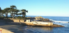 More Cypress Trees from Monterey, California. (MargauxB) Tags: loverspoint pacificgrove cypresstrees elizabethingebretsenfineartist