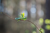 hope and light (Emma Varley) Tags: spring laves light trees forest hope growth renewal bokeh