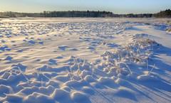 Scarborough Marsh, Maine (jtr27) Tags: dscf5966xl jtr27 fuji fujifilm fujinon xf 1855mm f284 lm ois rlmois scarborough marsh maine newengland