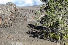 Fissure and Spatter Rampart (wyojones) Tags: hawaii hawaiivolcanoesnationalpark maunaulu fissure spatter spatterrqampart basalt lava eruption fissureeruption tree ʻōhiʻatree wyojones np
